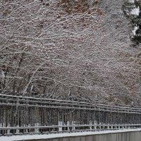 Снег прошел... :: Алексей Афанасьев