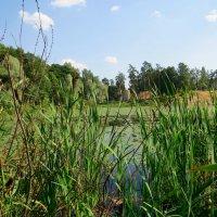 Зарастающее озеро :: Вера Щукина