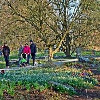 Воскресный день всей семьей в Ботаническом саду... :: Galina Dzubina