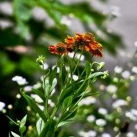 Так захотелось каких то цветочков ... !!! :: Ольга Винницкая