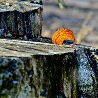 Одинокий.... :: Михаил Болдырев