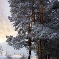 Совсем немного солнца :: Владимир Шамота