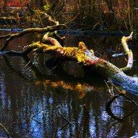 Тайны лесного озера :: Nina Yudicheva