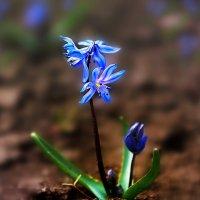 весны творенье :: Lena