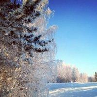 Хрустальность мартовского утра :: Николай Туркин