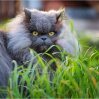 Милый котик! :: Борис Херсонский