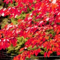 Краски осени :: Юлия Ярош