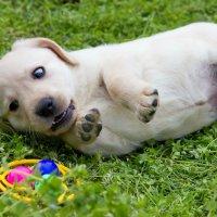 Вот так игрушка! :: Виолетта