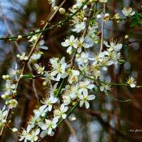 Улыбка весны :: Nina Yudicheva