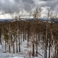 Рваные клочья над лесом летят. :: Сергей Адигамов