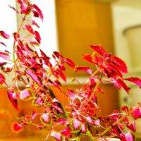 Бархатный цветок :: Сергей Алексеев