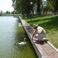 Лебединое озеро :: Евгений Голубев