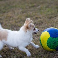Знакомство с мячом :: Valentina Zaytseva