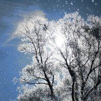 Лёгкий ветерок срывает иней с ветвей :: Николай Масляев