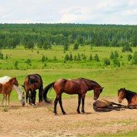Лошади на песке :: Сергей Чиняев