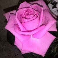 Роза :: Елена Семигина