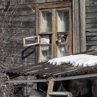 Март, окна нараспашку :: Николай Белавин