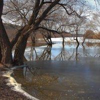 Озабочены разливом берега... :: Лесо-Вед (Баранов)