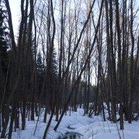 В лесу :: Дима Вахрушев