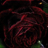 Любимая роза :: Нина Корешкова