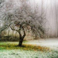Яблоки на снегу... :: Александр Селезнев