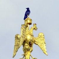 Птички над башней :: Сергей