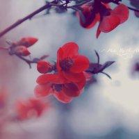 какая красота весна :: Армен Абгарян