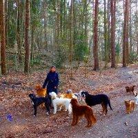 Встреча в лесу. Девушка с собаками :: Nina Yudicheva
