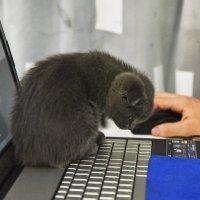Начинающий програмист. :: юрий Амосов
