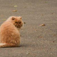 кот. старый добрый кот. :: Александр