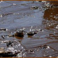 Кто-то видит в луже только грязь, а кто-то отражения звёзд:)) :: Андрей Заломленков