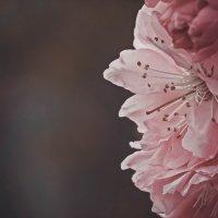 цветы :: Эдуард Куклин