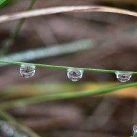 Дождь. :: Береславская Елена
