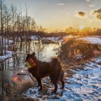 Солнце,Река,Собака.... :: Андрей Дворников
