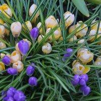 Весенний букет радости... :: Tatiana Markova