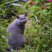 Котик с улыбкой :: Александр Деревяшкин