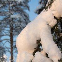 После снегопада :: Александр