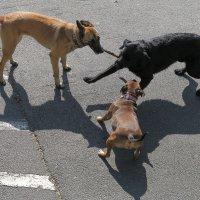 Собачьи радости :: Elen Dol