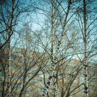 Весна идёт! :: Игорь Герман