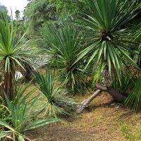 Детский сад пальмочек :: Вера Щукина