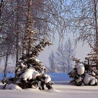 Морозное утро :: И.В.К. ))