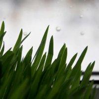 Весна  на  окне... Дождь за  окном. :: Валерия  Полещикова