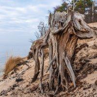 Прибрежный мамонт :: Леонид Соболев