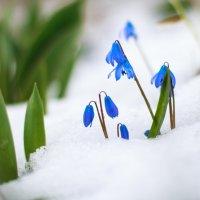 весна) :: Алена Колошва