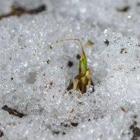 Пробуждение природы после зимы :: Юрий Бичеров