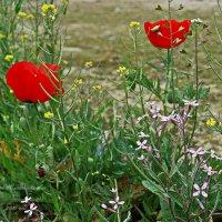 Весенние полевые цветы... :: Юрий Владимирович