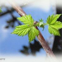Весенний блюз... :: Тамара (st.tamara)
