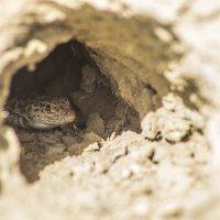 ящерица в норке :: Дмитрий Потапкин