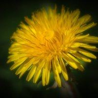 Здравствуй весна! :: Swetlana V