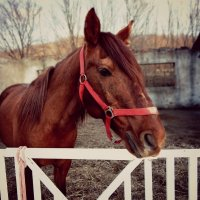 Лошадь :: Natalia Babukh